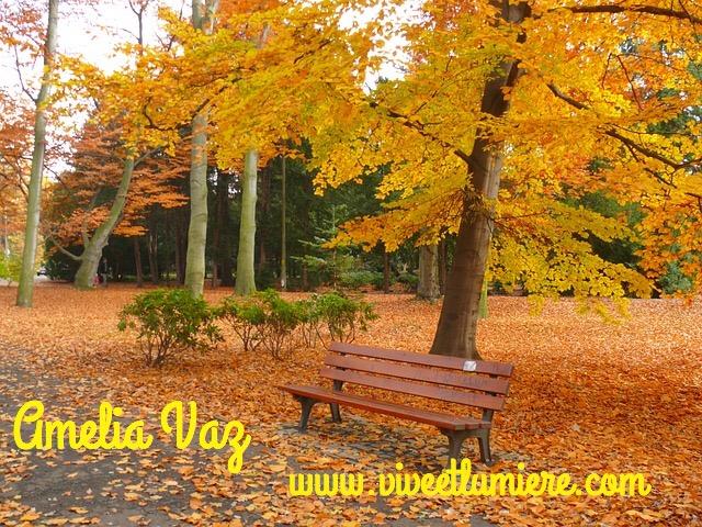 automne viveetlumiere